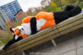fursuit-romp-oct-13-2018-109
