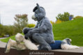 fursuit-romp-oct-13-2018-126