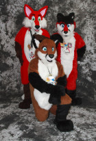 cat-days-photoshoot-three-foxes