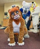 fursuit-mnfurs-crouching-lion