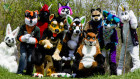 may-fursuit-photography-17-of-19