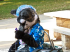 mnfurs-fall-picnic-fursuit-2011-sorry-to-say