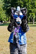 mnfurs-fall-picnic-fursuit-2011-sunglasses-on