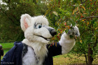 mnfurs-fursuit-aerak-twigs-and-berries