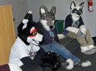 mnfurs-fursuit-for-the-next-round