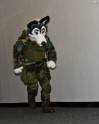 mnfurs-fursuit-solid-wolf