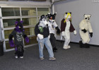 mnfurs-fursuit-walk-calmly-forward