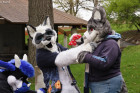 mnfurs-fursuit-what-is-happening