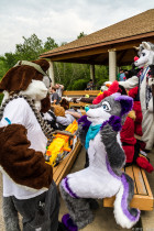 mnfurs-spring-2012-picnic-fursuit-dont-shoot