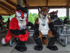 mnfurs-spring-2012-picnic-fursuit-edge-of-seat