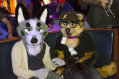 fursuit-bowling-nov-7-2015-435