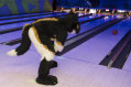fursuit-bowling-oct-9-2015-330